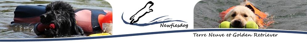 Newfiesdog